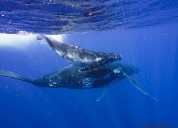 Whale_Photo.JPG