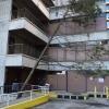 Fallen Tree at School of Nursing
