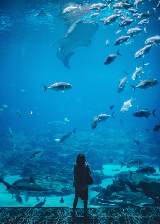 person looking up at a fish in aquarium.